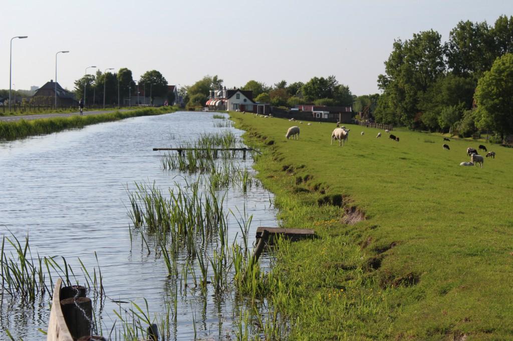 каналы нидерландов фото