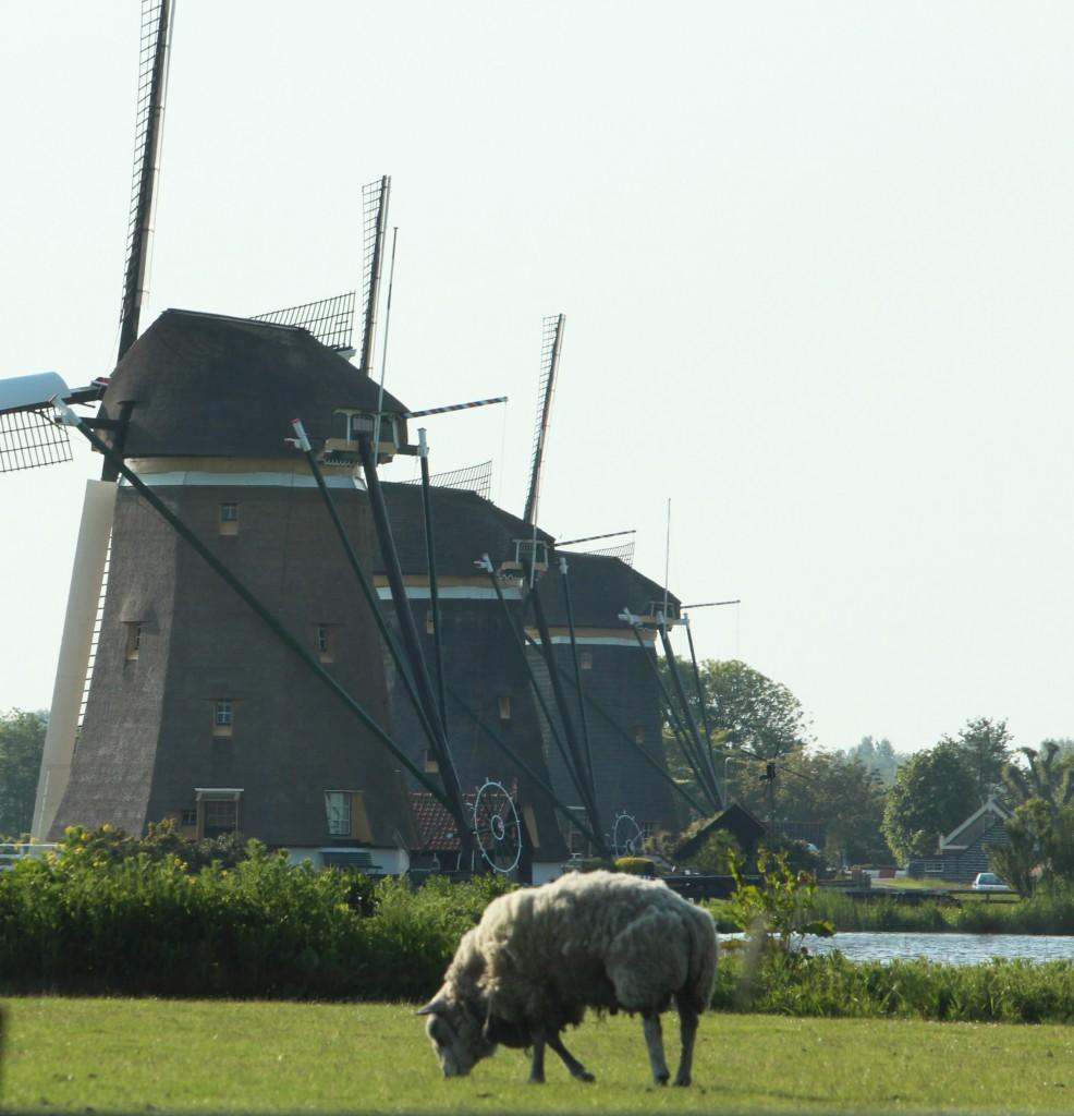 поездка в нидерланды фото