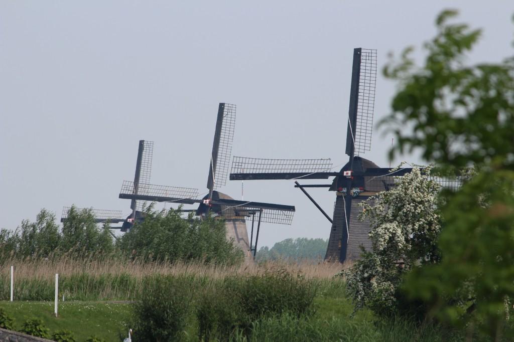 старые мельницы нидерланды